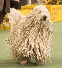 purebred-dog