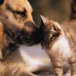 dogprotectcat