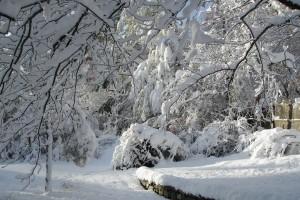 stormhalloween2011-006small