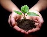 nurture-a-plant