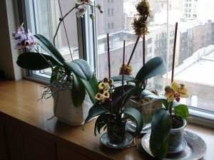Orchids for blog Jan 2016 002