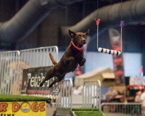 Ultimate Air Dogs Competition @ Super Pet Expo